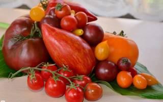 Новые сорта томатов на 2020 год
