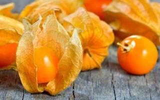 Физалис съедобный как употреблять в пищу чем полезен выращивание и уход