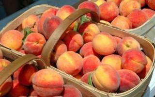 Сорта персиков ранние средние поздние с фото названием и описанием сроки созревания