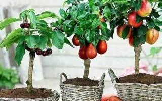 Карликовые плодовые деревья сорта отзывы