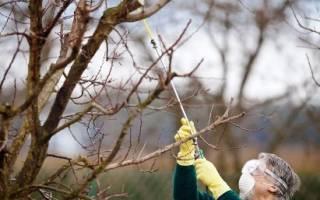 Обработка груши весной и осенью от вредителей от парши цветоеда клеща