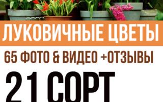 Луковичные многолетники фото и их названия