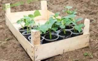 Посев огурцов в мае