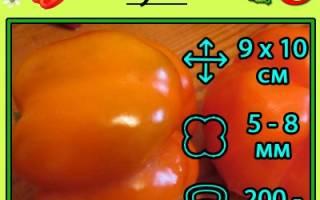 Перец оранжевое чудо описание сорта фото отзывы