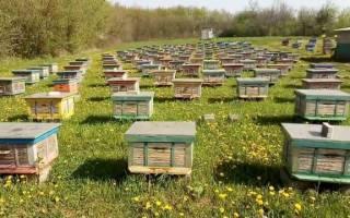 Промышленное пчеловодство технология оборудование
