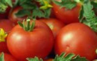Сорта помидоров для салатов с описанием и фото