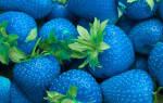 Голубая синяя клубника фото отзывы