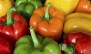 Сорта перцев для ленинградской области для теплиц