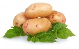 Голландские сорта картофеля фото и описание