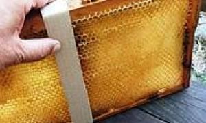 Обработка пчел щавелевой кислотой от варроатоза инструкция по применению польза и вред лечение с глицерином по шведской технологии