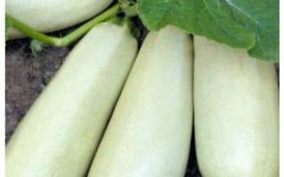 Белоплодные сорта кабачков описание фото