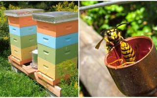 Ловушка для ос как избавиться как защитить пчел