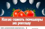 Когда сажать помидоры на рассаду в 2020 году