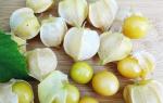 Физалис ананасовый рецепты приготовления на зиму выращивание уход фото