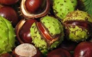 Грецкий орех польза и вред для мужчин и женщин состав калорийность
