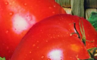Томат царьколокол характеристика и описание сорта