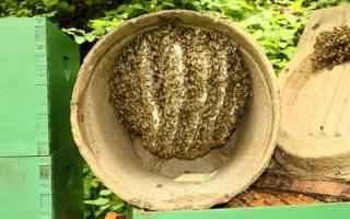 Как применять приманку унирой для пчелиных роев средства для привлечения как сделать своими руками