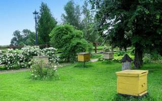 Уход за пчелами весной летом перевозка пересадка в новый улей чем окуривают