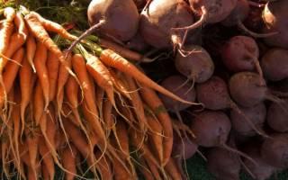 Как хранить морковь и свеклу в погребе
