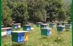 Пчеловодство как бизнес с чего начать как преуспеть выгодно или нет отзывы
