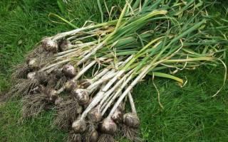 Удобрение для лука и чеснока