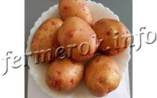 Сорт картофеля жуковский ранний характеристика отзывы
