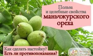 Настойка маньчжурского ореха на водке применение лечебные свойства отзывы