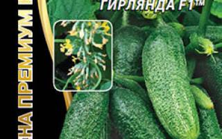 Огурцы сибирская гирлянда f1 отзывы + фото