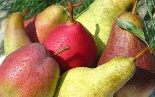 Подкормить груши весной какое удобрение вносить для роста