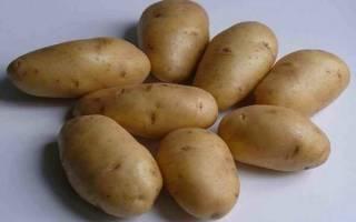 Картофель аврора описание сорта отзывы фото