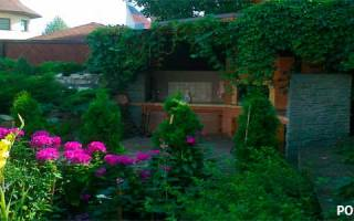 Вертикальное озеленение на даче своими руками + фото