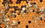 Мешотчатый расплод признаки фото средства для лечения отзывы