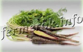 Сорта черной моркови с фото и описанием